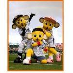阪神タイガースのファン感謝デー2015のチケットはどこで買えるの?イベント内容も気になる。注目は現役対OB対決!