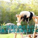 シロクロ5話の偽ミスパンダと飼育員さんの正体をネタバレ!