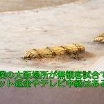 大相撲の大阪場所が無観客試合でチケット返金やテレビ中継はあるの?