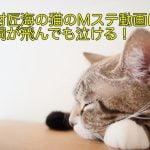北村匠海の猫のMステ動画は?歌詞が飛んでも泣ける!